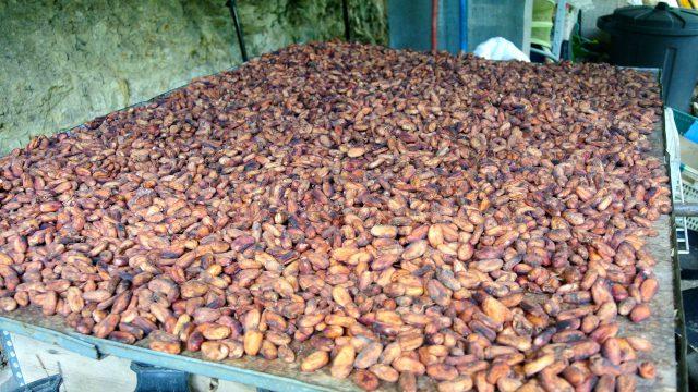 Shanao Cacao
